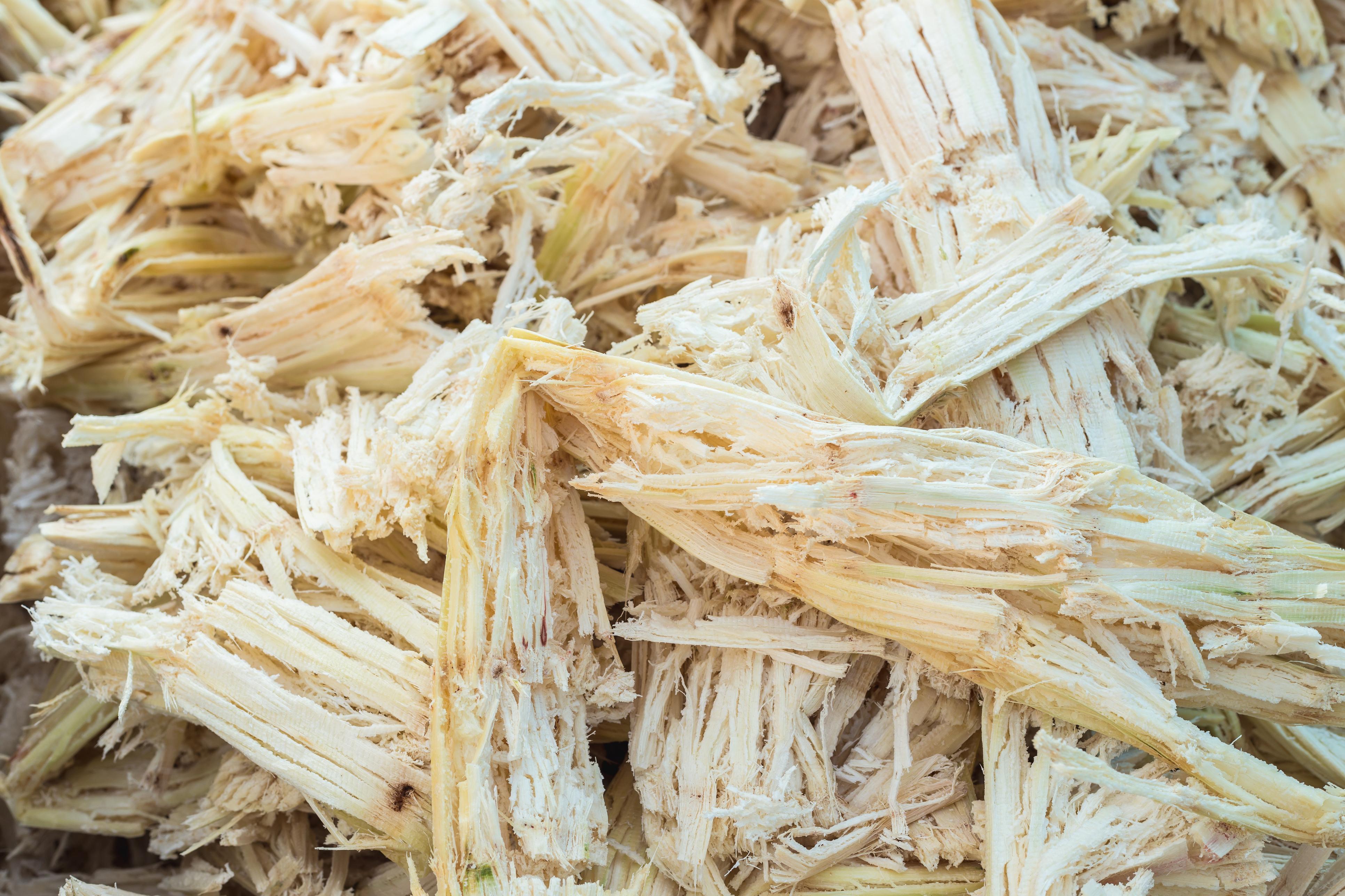 Biotecnologie – lignine : nuovo progetto finanziato con i fondi POR-FESR